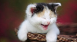 Smiling Cats Photo Download