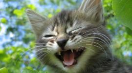 Smiling Cats Wallpaper