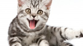 Smiling Cats Wallpaper For PC