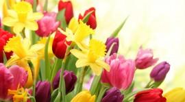Spring Flowers Best Wallpaper