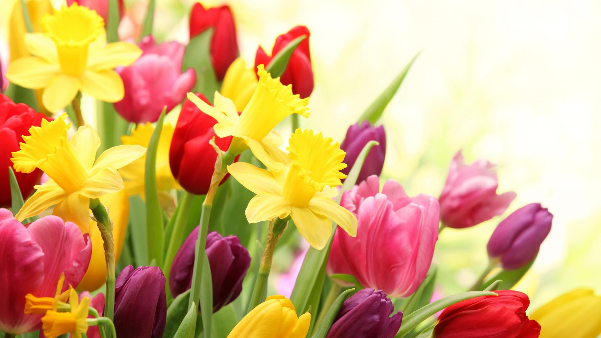 Spring Flowers Wallpapers High Quality Download Free