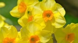 Spring Flowers Desktop Wallpaper For PC