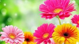 Spring Flowers Desktop Wallpaper HD#1