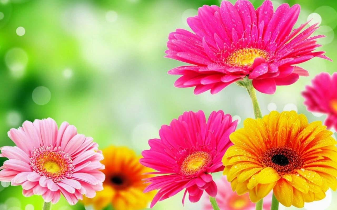 Spring flowers wallpapers high quality download free spring flowers wallpapers mightylinksfo