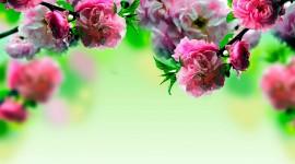 Spring Flowers Desktop Wallpaper#1