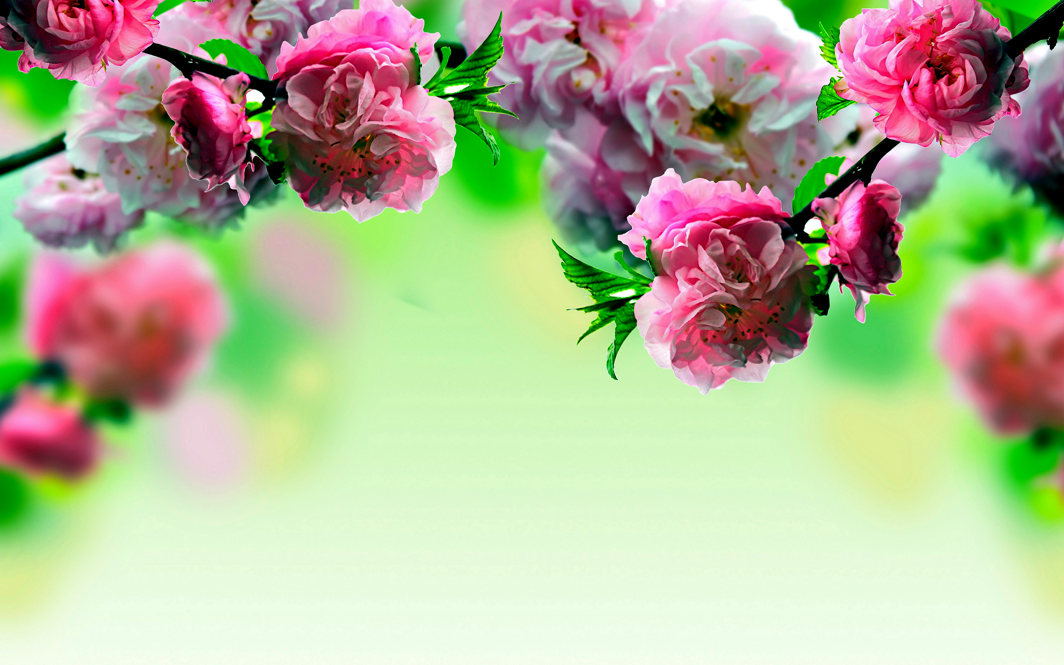Spring flowers wallpapers high quality download free spring flowers desktop wallpaper1 mightylinksfo