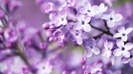 Spring Flowers Photo Free
