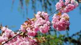 Spring Flowers Photo Free#1