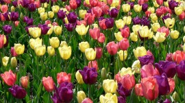 Spring Flowers Photo Free#2