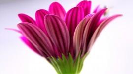 Spring Flowers Photo#1