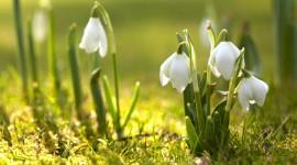 Spring Flowers Wallpaper 1080p