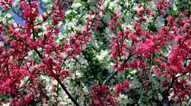 Spring Flowers Wallpaper Background