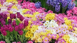 Spring Flowers Wallpaper For Desktop