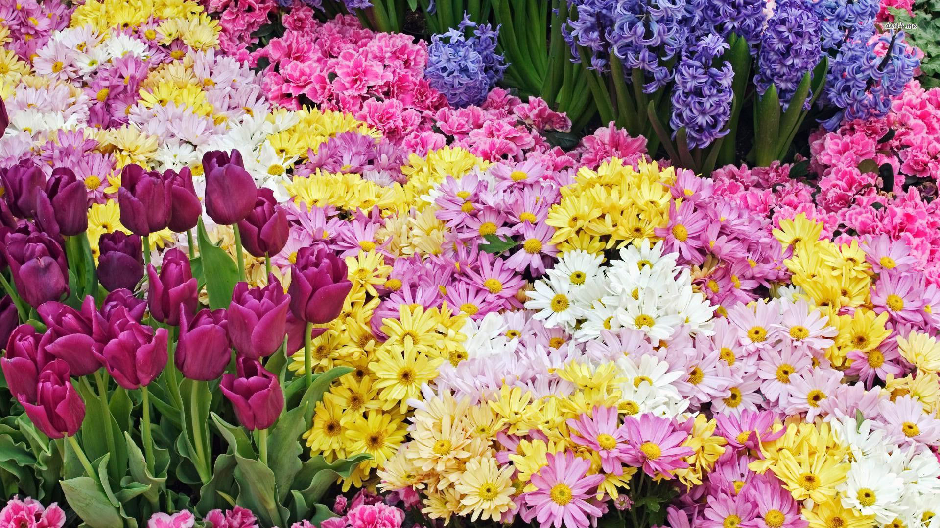 Free Wallpaper Spring Flowers Flowers Healthy