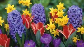 Spring Flowers Wallpaper Free