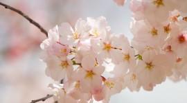 Spring Flowers Wallpaper Full HD