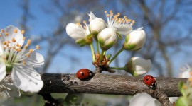Springtime Photo Download