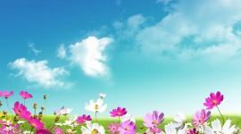 Springtime Photo Free