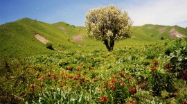 Springtime Wallpaper Download
