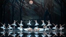 Swan Lake Photo Download