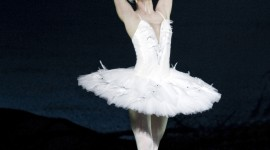 Swan Lake Wallpaper For Android