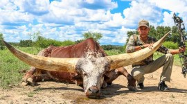Watusi Wallpaper Download