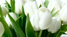 White Flowers Desktop Wallpaper