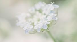 White Flowers Desktop Wallpaper Free