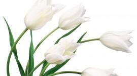 White Flowers Wallpaper 1080p
