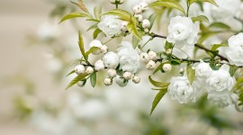 White Flowers Wallpaper Download Free