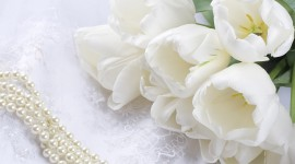 White Flowers Wallpaper For PC