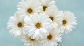 White Flowers Wallpaper Free