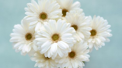 White Flowers wallpapers high quality
