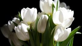 White Flowers Wallpaper High Definition