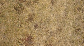 Yellow Grass Photo Download