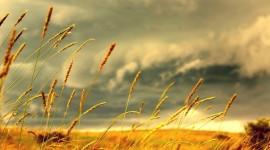 Yellow Grass Wallpaper