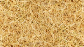 Yellow Grass Wallpaper For IPhone