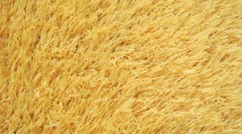 Yellow Grass Wallpaper For PC