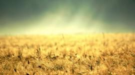 Yellow Grass Wallpaper Full HD