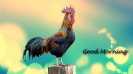 4K Good Morning Wallpaper Gallery