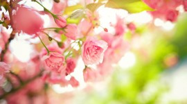 4K Springtime Desktop Wallpaper For PC