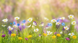 4K Springtime Wallpaper Download