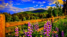 4K Springtime Wallpaper Download Free