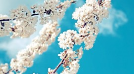4K Springtime Wallpaper Free