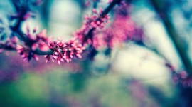 4K Springtime Wallpaper Gallery