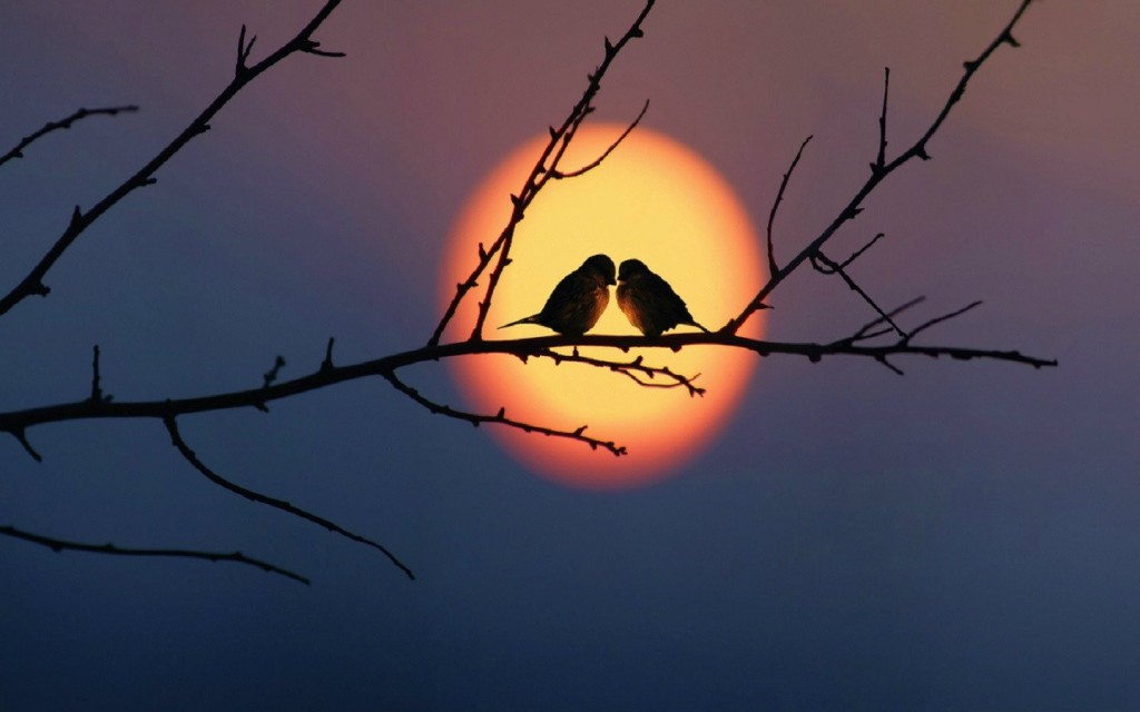 Birds At Sunset wallpapers HD
