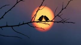 Birds At Sunset Best Wallpaper