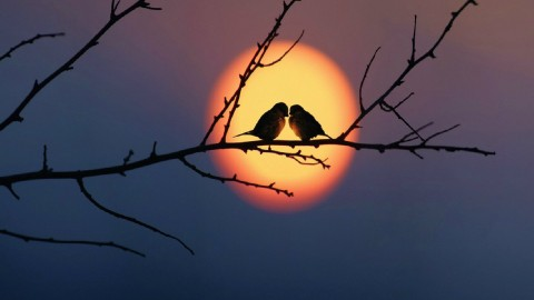 Birds At Sunset wallpapers high quality
