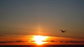 Birds At Sunset Desktop Wallpaper