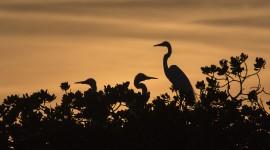 Birds At Sunset Photo